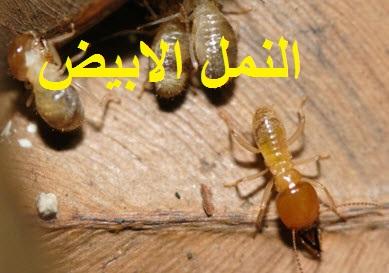 f:id:IsraZidanene:20161204055123j:plain