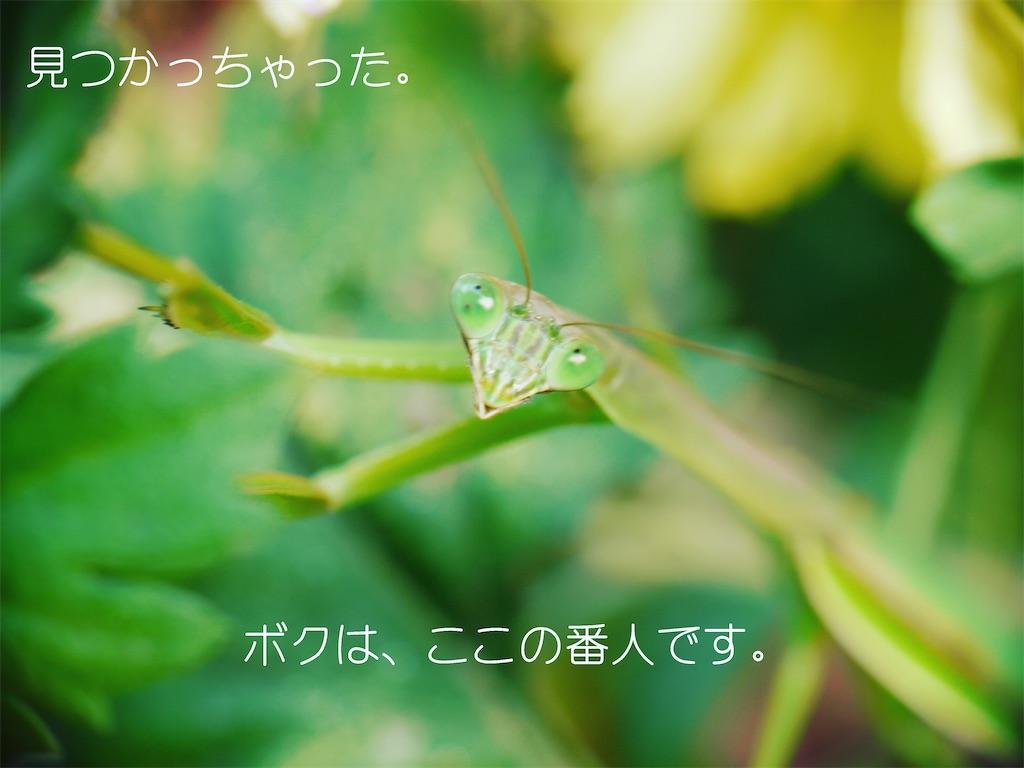 f:id:Iyokan:20201121163440j:image