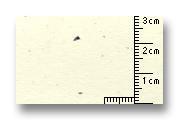 f:id:JAM1963:20110117192923j:image