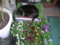 花屋のねこ
