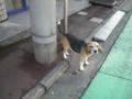 [横浜][動物]るすばん犬