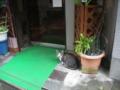 [横浜][ねこ]雨宿り