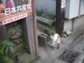 [横浜][ねこ]みけねこ