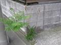 [横浜][植物]命のリレー