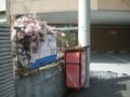 [横浜][植物]掲示板を覆うジャスミン
