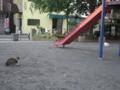 [横浜][ねこ]双葉公園
