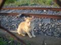 [横浜][ねこ][鉄道]線路上のねこ