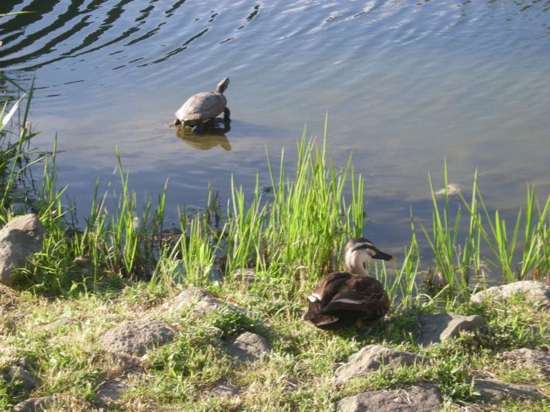 池の亀と鳥