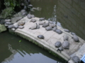 [西区][動物]亀