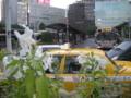 [西区][花][車][バス]駅前にユリ