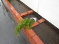 [横須賀][植物]浸水
