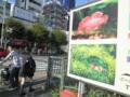 [東京][動物]さかなさま