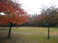 [神奈川区]広々とした公園