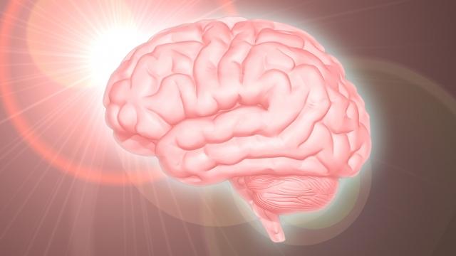 脳機能の改善、思考能力アップ