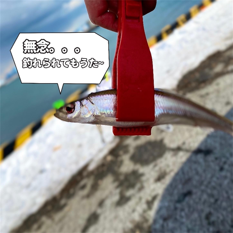 f:id:Jagaimoboys:20200208230615j:image