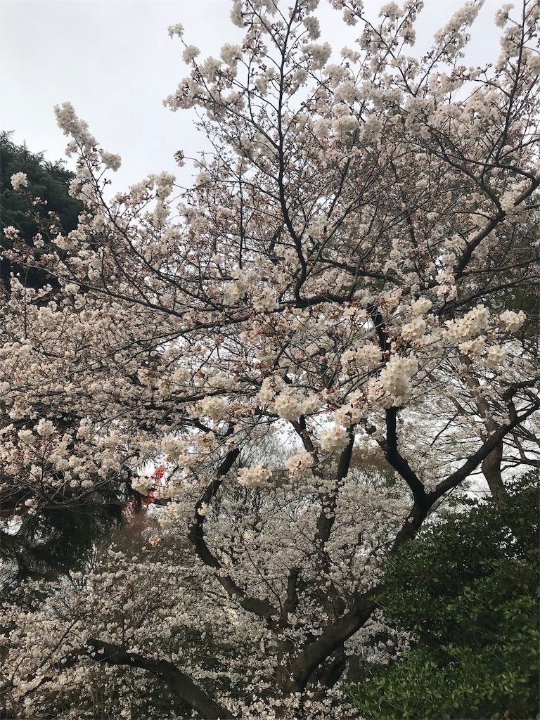 f:id:Jiyu-na-neko:20180325205047j:image