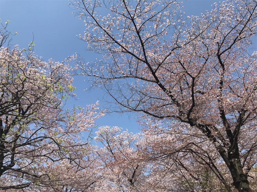 f:id:Jiyu-na-neko:20180401202736j:image