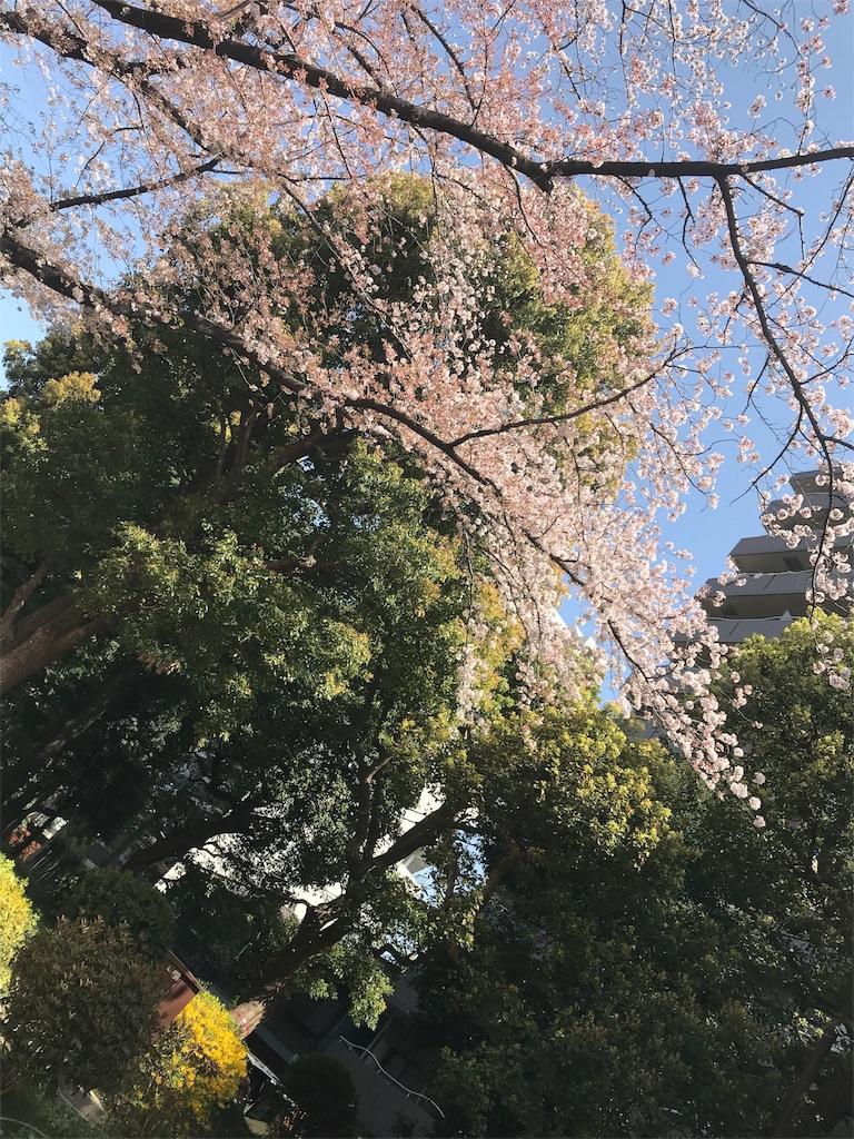 f:id:Jiyu-na-neko:20180401202807j:image