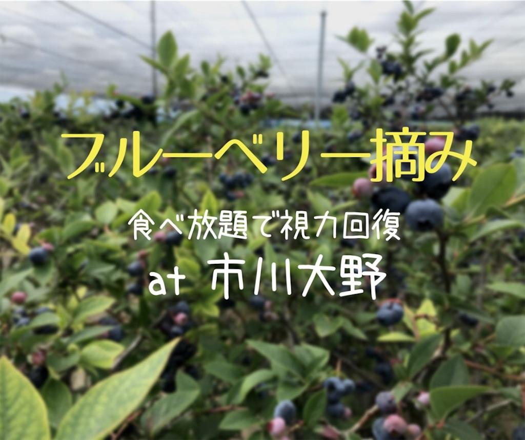 f:id:Jiyu-na-neko:20180720103344j:image