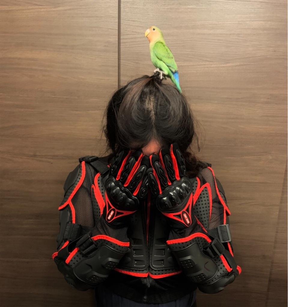 f:id:Jiyu-na-neko:20201216154812j:image