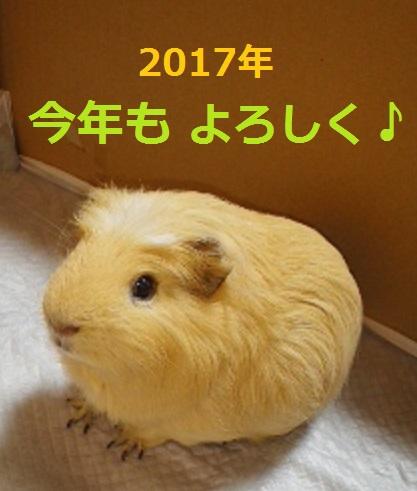 f:id:Jodel-nozomi:20170101233810j:plain