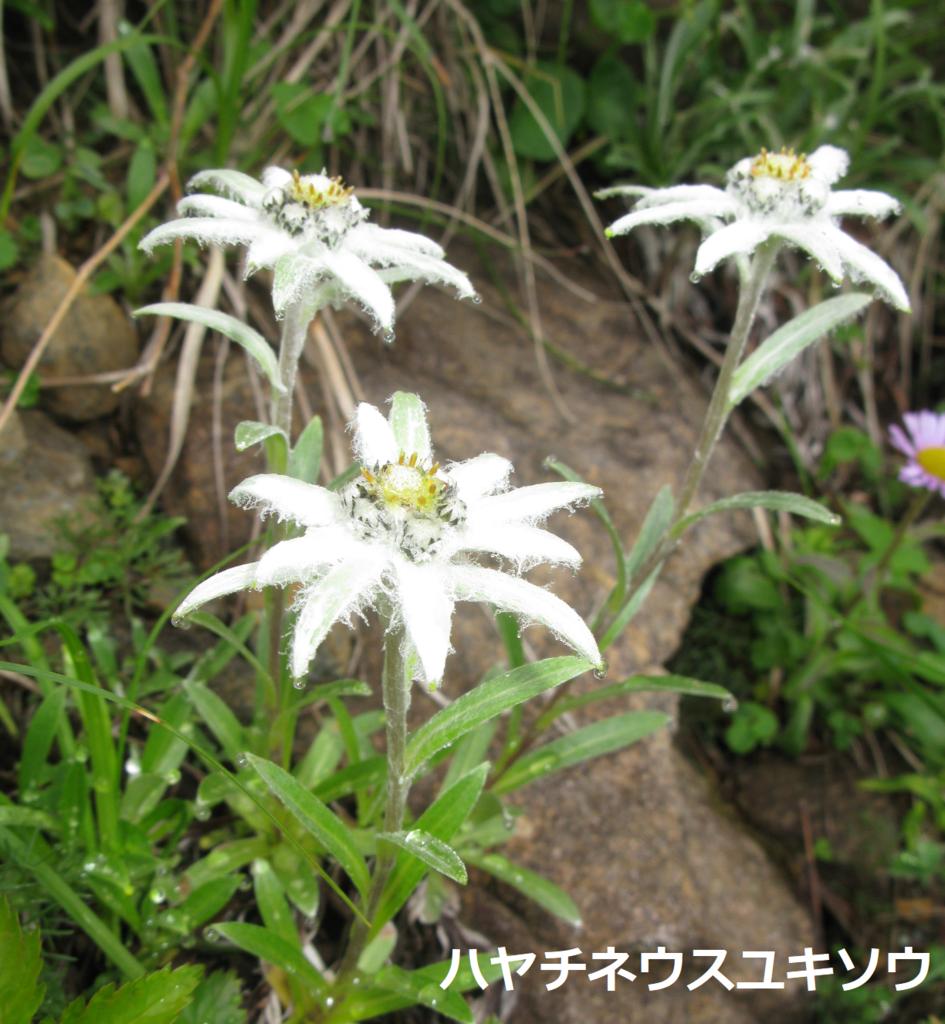 f:id:Jodel-nozomi:20170713000401p:plain