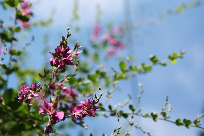 東福寺に咲く花