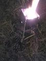 [キャンプ]松ぼっくり焚き火