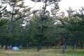 [キャンプ]大島キャンプ場