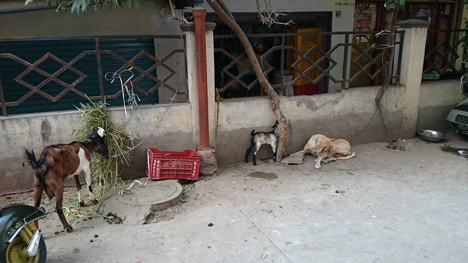 f:id:Jugaad-INDIA:20161027000913j:plain