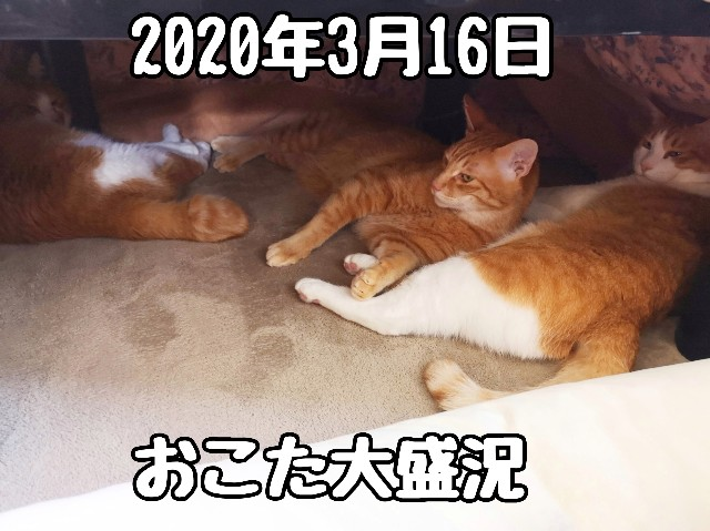 f:id:JuneNNN:20200317113651j:plain