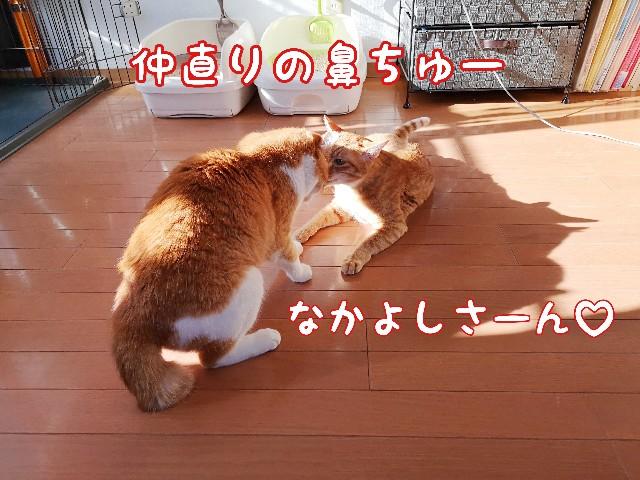 f:id:JuneNNN:20200519120110j:plain