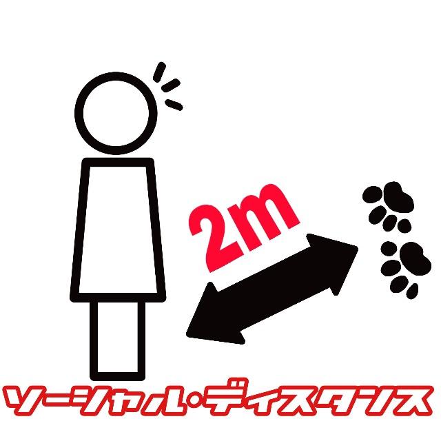 f:id:JuneNNN:20200602171336j:plain