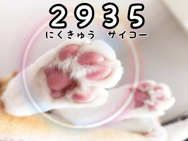 f:id:JuneNNN:20210316142854j:plain
