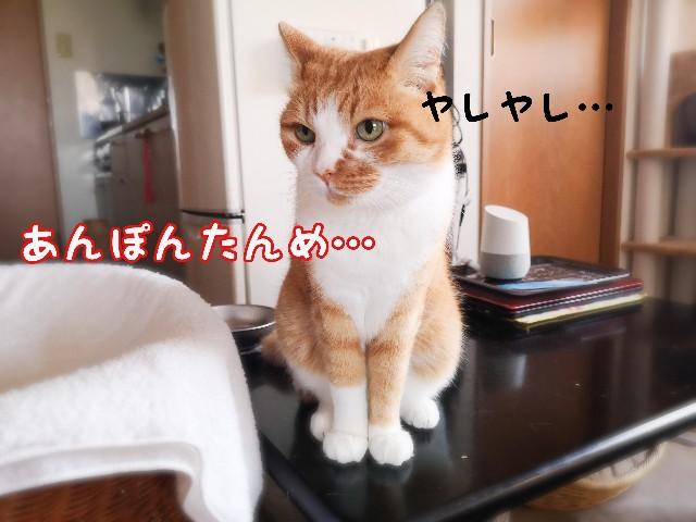 f:id:JuneNNN:20210620111524j:plain