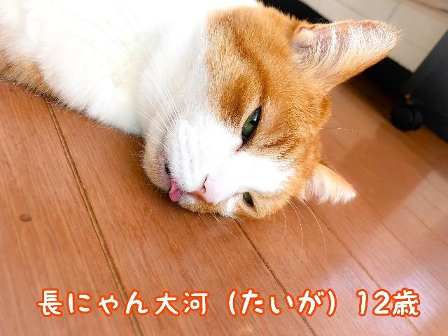 f:id:JuneNNN:20211022124109j:plain