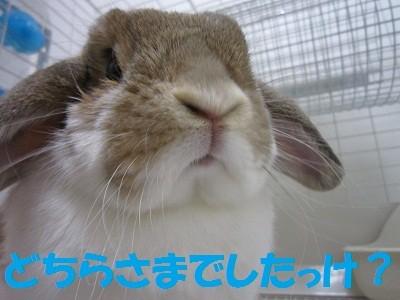f:id:Juniffy:20100725212612j:image