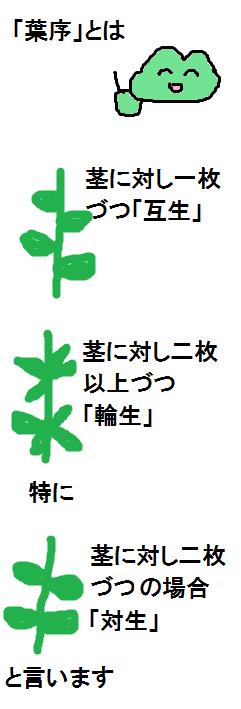 f:id:KAERUSAN:20190623135926j:plain