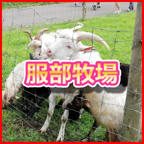 f:id:KAMP-Yokohama:20200531095415j:plain
