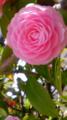10/04/08:何の花かな?