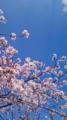 10/04/08:桜空