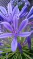 10/07/12:雨の…何ていう花?