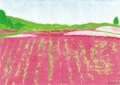 芝桜(林けいか)