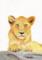 林動物園_子どもライオン_林けいか
