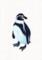 林動物園_フンボルトペンギン_林けいか