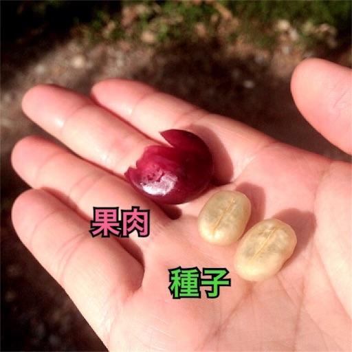 コーヒーチェリーの果肉と種子
