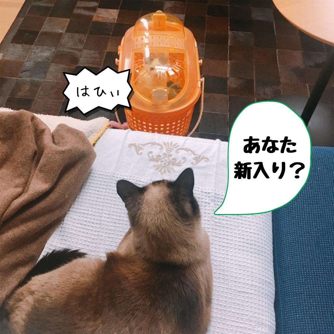 f:id:KH-yakudachi:20210416003536p:plain