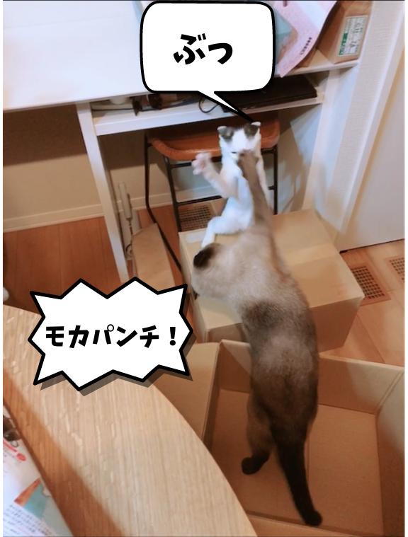 f:id:KH-yakudachi:20210422010400p:plain