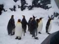 旭山動物園 ペンギン1