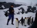 旭山動物園 ペンギン2